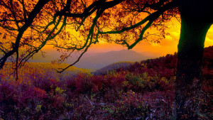 Shenandoah National Parks Facts & information